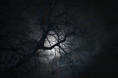 Bare tree in moonlight Stock Photo