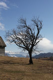 Bare tree in mountain landscape Royalty Free Stock Images