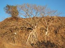 Bare tree on mountain Stock Photos