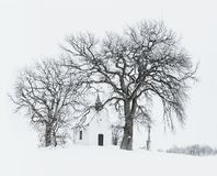 Bare Tree Near Building during Snow Time Photo Royalty Free Stock Photo
