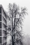 Fog tree and apartment building royalty free stock photos