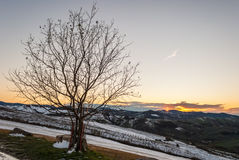 Bare tree in the Oltrepo' Pavese at the sunset Royalty Free Stock Images