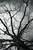 Bare tree over dark cloudy sky Stock Images