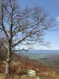 Bare tree overlooking valley Stock Photo