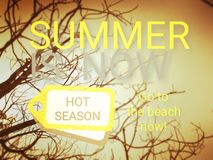 Bare tree with phrase summer is now. Yellow background with bare tree and phrase summer is now, hot season beach concept relax rest royalty free stock images