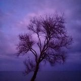 Bare tree in purple landscape Royalty Free Stock Photo