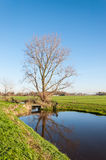 Bare tree reflected. Rural Dutch landscape in autumn with a bare tree reflected in the water surface Royalty Free Stock Photos