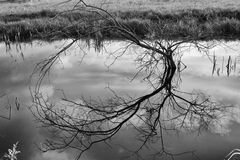 Bare tree reflecting off water Stock Images