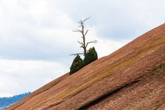 Bare Tree Rising from Red Rock Mountain Stock Images
