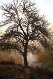 Bare tree and river in the morning Royalty Free Stock Photo