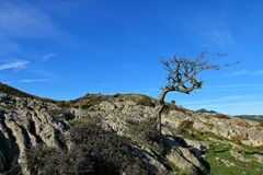 Bare tree on a rocky hill with a clear blue sky in the background