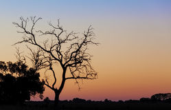 Bare tree silhouette at beautiful sunset. Royalty Free Stock Photos