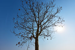 Bare tree silhouette with blue sky background. Stock Photos