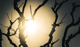 Bare tree silhouette royalty free stock photography