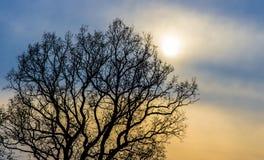 Bare tree silhouette Stock Photo