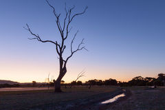 Bare tree silhouette at sunset. Bare tree silhouette at sunset Royalty Free Stock Photo