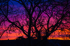 Bare tree silhouette at sunset, Ireland. Silhouette of bare tree in Ireland countryside at sunset stock photography
