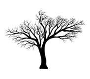 Bare tree silhouette vector symbol icon design. Stock Photo