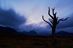 Bare tree silhouetted at dusk Royalty Free Stock Images