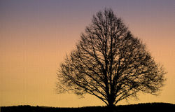 Bare Tree Silhouetted on Linen Royalty Free Stock Images