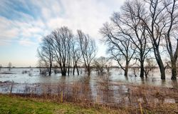 Bare tree silhouettes on the flooded riverside. In the Netherlands.  It is a cloudy day in the beginning of the winter season and the water level is very high Stock Photos