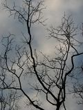 Bare tree and sky. Silhouetted bare tree limbs and branches against gray clouds and sky Royalty Free Stock Photo