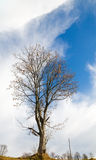 Bare tree on sky background Royalty Free Stock Photo