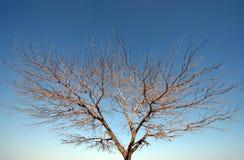 Bare tree. On sky background Stock Photos