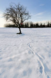 Bare tree in the snow. Country field the morning after a heavy snowfall, a bare tree stands alone at sunset Royalty Free Stock Photo