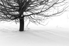 Bare Tree In Snow Stock Image