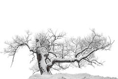Bare tree in snow Stock Images