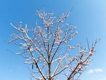Bare Tree snow winter season Royalty Free Stock Photo