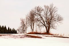 Bare tree in snowy landscape in sunset Royalty Free Stock Photos