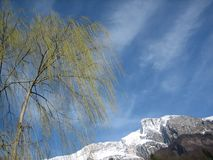 Bare Tree and Snowy Mountain Stock Images