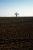 Bare tree on soil land Stock Photos