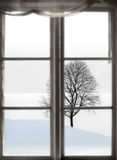 Bare tree in sparse winter landscape Royalty Free Stock Photography