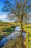 Bare tree standing beside a small stream Stock Photo