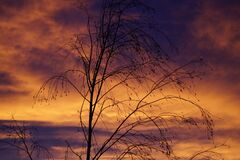 Bare tree at sunset Royalty Free Stock Photo