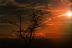 A bare tree at sunset