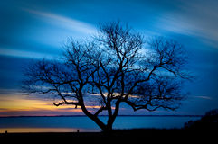 Bare tree in the sunset Royalty Free Stock Photography