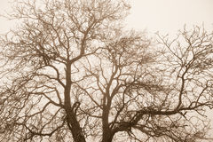 Bare Tree Top Branches Stock Images