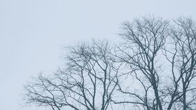 Bare Tree Tops In Wind. Bare tree tops in winter sway in the breeze stock video footage