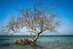 Bare tree in tropical blue sea Royalty Free Stock Photos