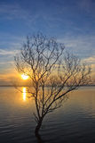 Bare tree in tropical Reservoir with Royalty Free Stock Photos