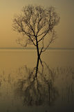 Bare tree in tropical Reservoir with Stock Image