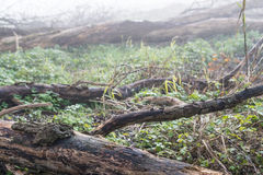 Bare tree trunk on a foggy day Stock Images