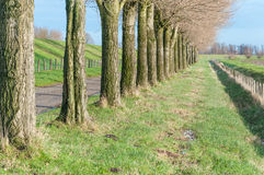 Bare tree trunks in a row Stock Image