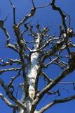 Bare tree under the sky Stock Photo