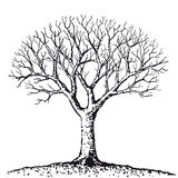 Bare tree (vector) Royalty Free Stock Photos