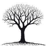 Bare tree (vector) royalty free illustration